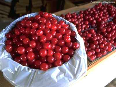Door County Cherries courtesy Gary Knowles