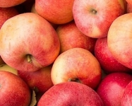 Visit Five Great Apple Orchards in Fall