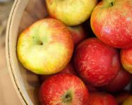 Apple Orchards to Savor Fall Flavor
