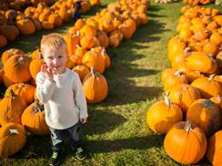 Image for Got Pumpkin? Wisconsin Patches, Great Eats and Festivals for Fall