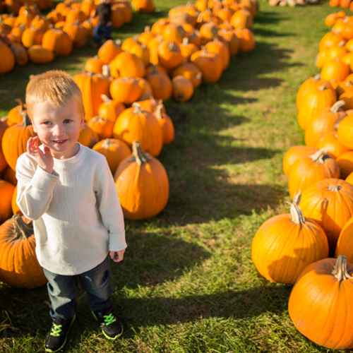 Got Pumpkin? Wisconsin Patches, Treats and Festivals for Fall