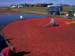 Image for Four Must-Stops Along the Wisconsin Cranberry Trail