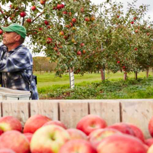 Five Apple Orchards to Savor Fall Flavors