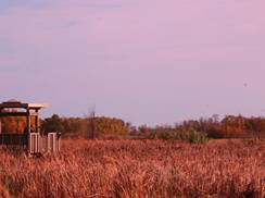Image for Top 5 Birding Trails in Wisconsin