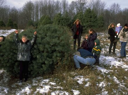 Image for More Than a Christmas Tree: 9 Wisconsin Farms