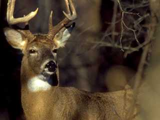 Deer Hunting Season Forecast in Wisconsin