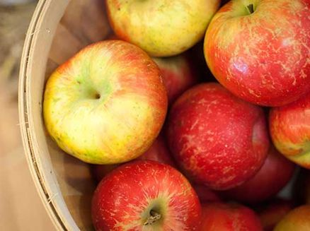 Image for Five Apple Orchards to Savor Fall Flavors