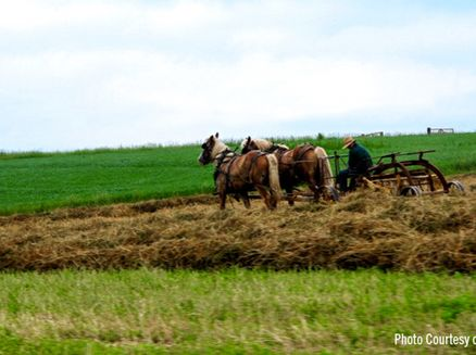 Image for Experience Amish Country in Wisconsin