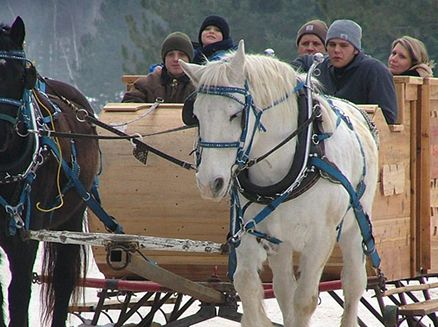 Image for Events Offering Sleigh Rides Around Wisconsin