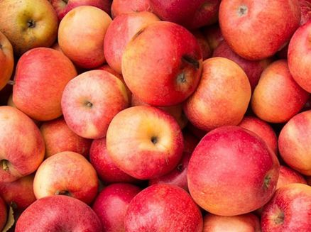 Image for Fall Harvest: Visit an Apple Orchard this Season