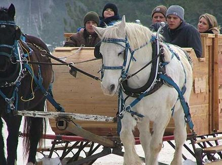 Image for Six Wisconsin Spots for Horse-Drawn Sleigh Rides