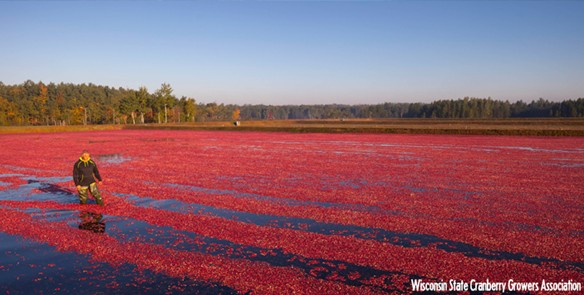 Four Must-Stops Along the Wisconsin Cranberry Trail