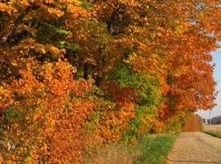 Image for Hunting for Gold: Vibrant Fall Colors in Southern Wisconsin