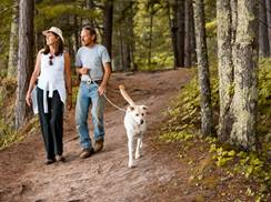 Image for 5 Fall Hikes Perfect for Your Pup
