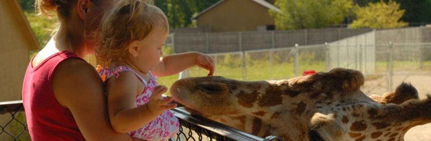 A young girl softly pets the nose of a gentle giraffe at the NEW Zoo.