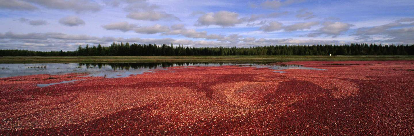 Cranberry Country