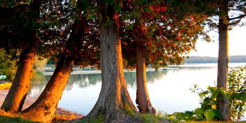 Trees along scenic Elkhart Lake in the fall.