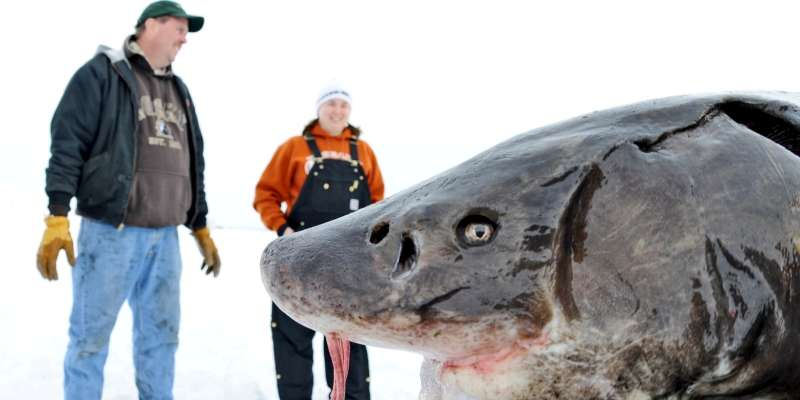 Spectators enjoy getting a glimpse of a sturgeon, a giant prehistoric fish that can be found in Lake Winnebago.