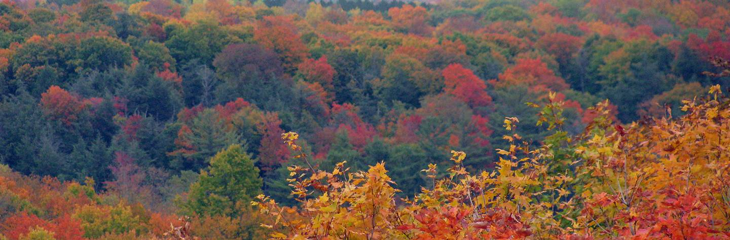Fall Color at Timm's Hill, the highest geographical point in Wisconsin