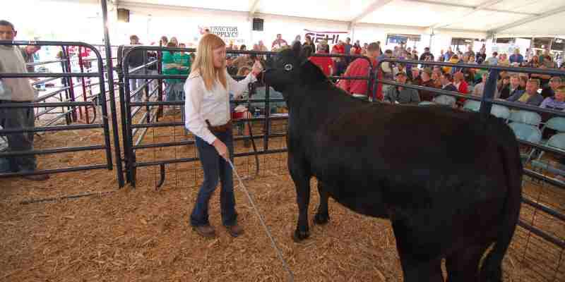 Waukesha County Fair - Shows