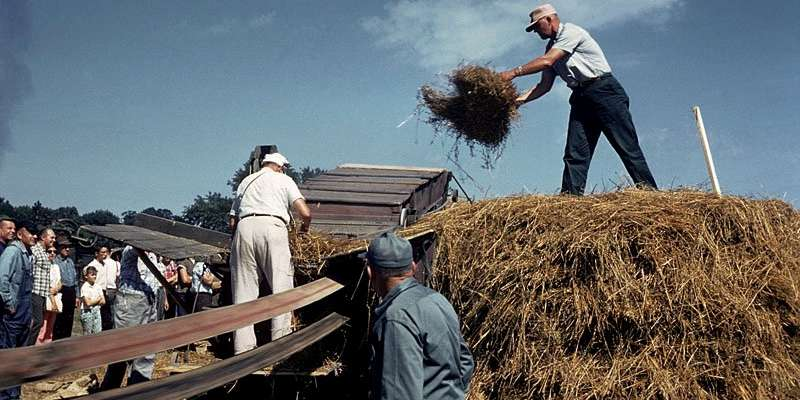 Threshing hay