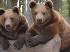 Image for Shalom Wildlife Zoo Bear Birthday Party