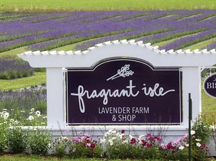 Image for All Things Lavender Festival