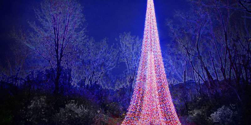 Lighted tree at the Garden of lights.