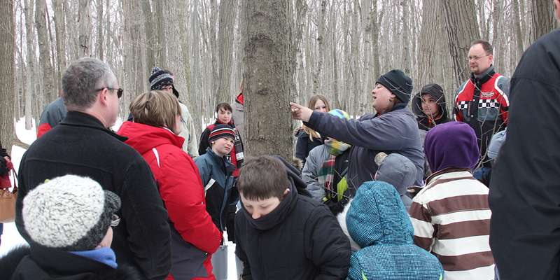 Learning to tap a maple tree