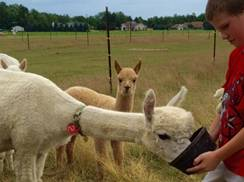 Image for Alpaca Odyssey and Open House