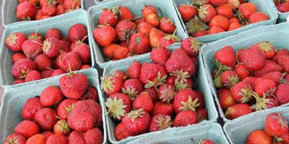 Fresh strawberries for sale at Strawberry Fest.