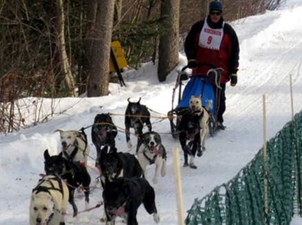 Image for Winter Festival, Three Bear Winter Sled Dog Races