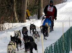 Image for Winter Festival/Three Bear Winter Sled Dog Races & Midwest American Championship
