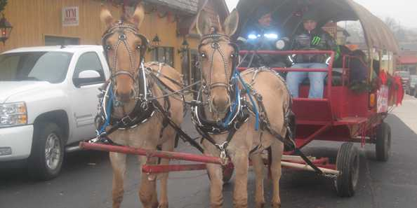 Carriage Rides throughout the Historic Downtown