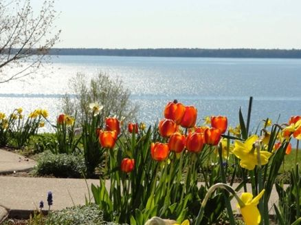 Image for Bayfield In Bloom