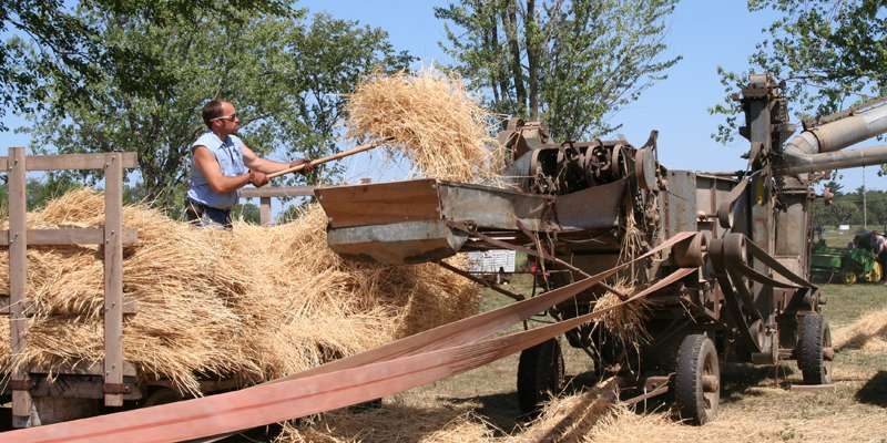 Thresheree - old time farming demonstrations.