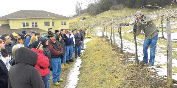 Grapevine pruning demonstration at Wollersheim Winery's annual open house
