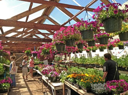 Image for Hauser's Red Barn Plant Sale