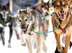 Image for Apostle Islands Sled Dog Race