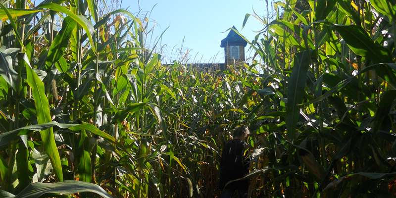 A view of the schoolhouse from the corn maze at Norskedalen Heritage Site.