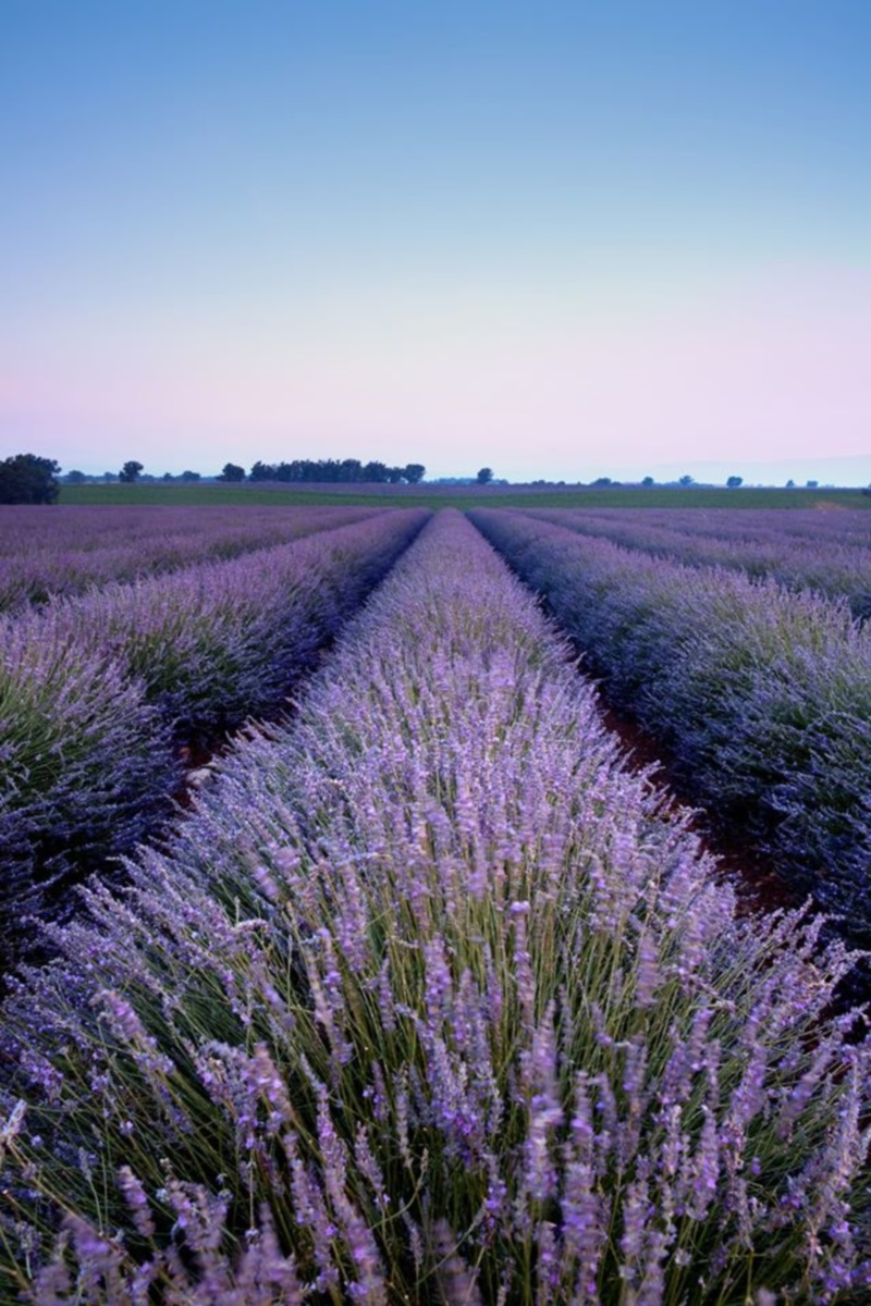 All Things Lavender Festival Travel Wisconsin