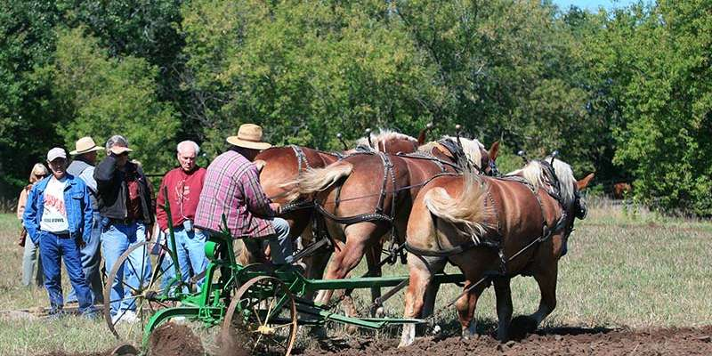 An Old World Wisconsin farmer demonstrates horse-drawn plowing