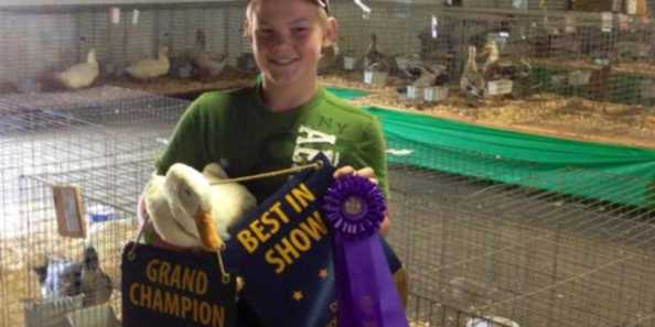 4-H member with winning ribbons