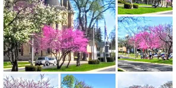 Come on out and see these trees in full bloom