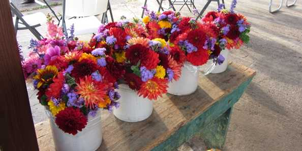 Beautiful flowers for sale at Farmers Market