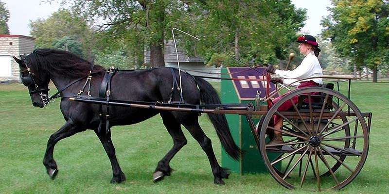 A carriage driver puts her horse through the paces in the Gambler's Choice event