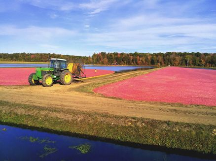 Image for Cranberry Harvest Tours