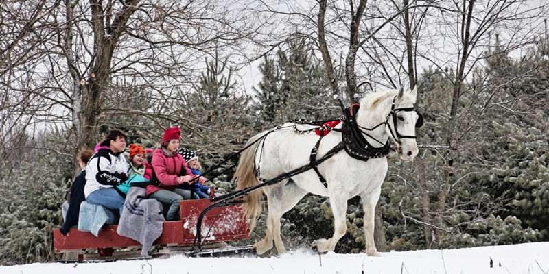 Free Horse-drawn Bobsled Rides