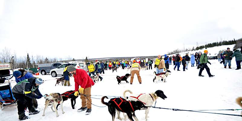 Volunteer at the Apostle Islands Sled Dog Race