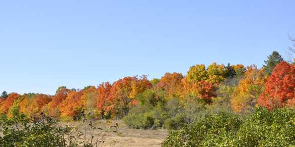 Fall foliage at MacKenzie Environmental Center.